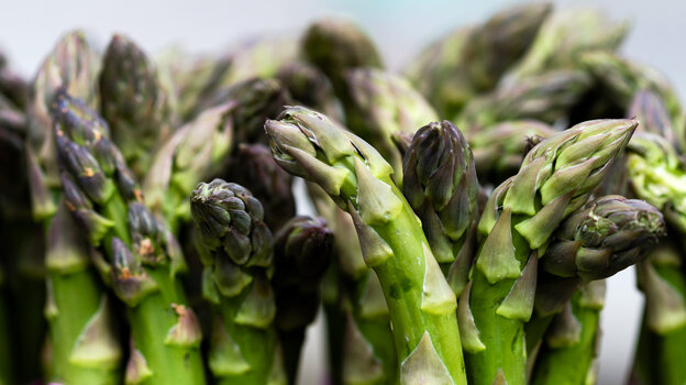 From the botanical to the economic, spring's iconic vegetable still harbors surprises.