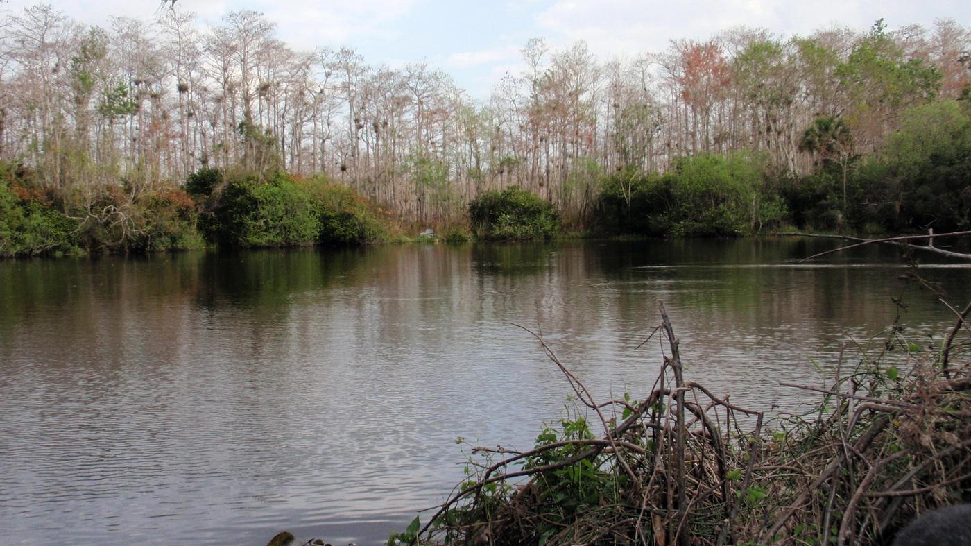 Car Talk Podcast >> Oil Industry Gets An Earful As It Eyes Florida's Everglades : NPR