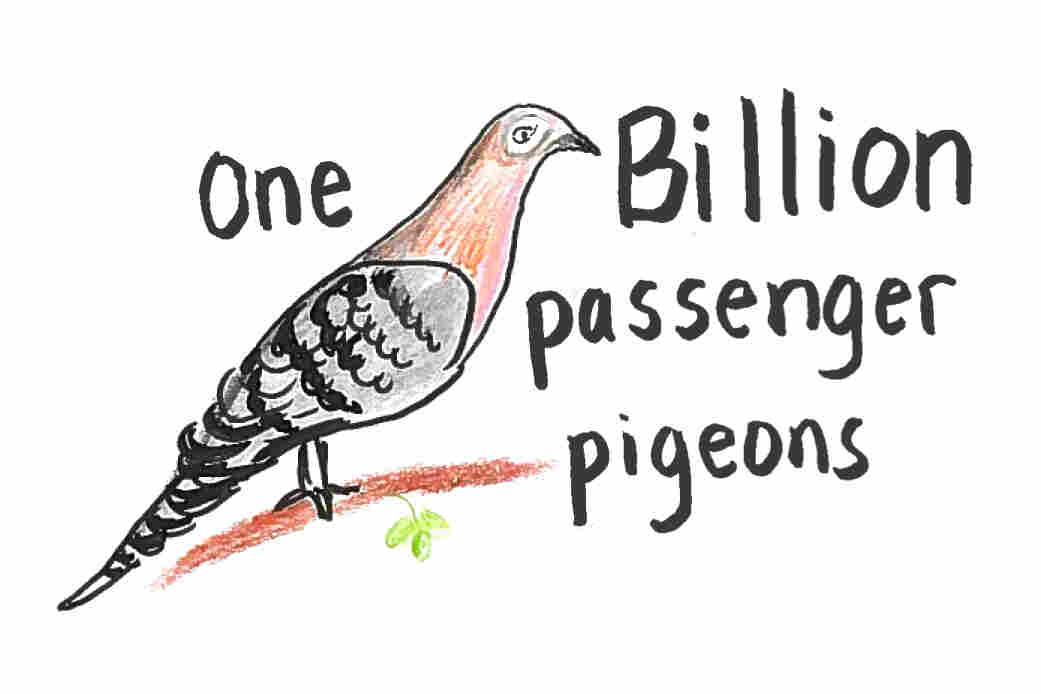 Imagine 1 billion passenger pigeons.