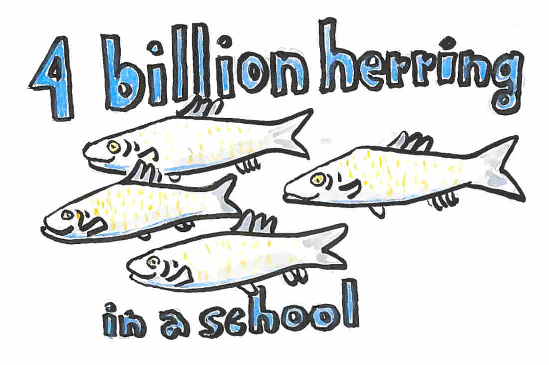 Imagine 4 billion herring in a school.
