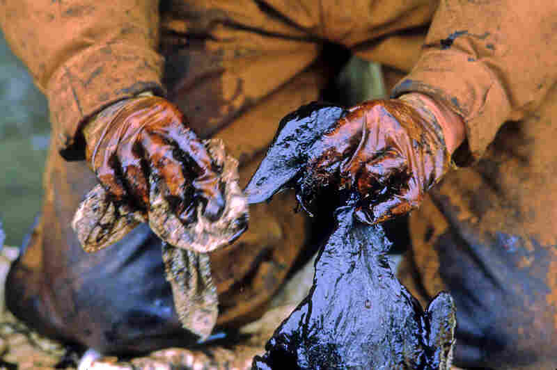 A worker cleans birds soiled by crude oil in Prince William Sound.