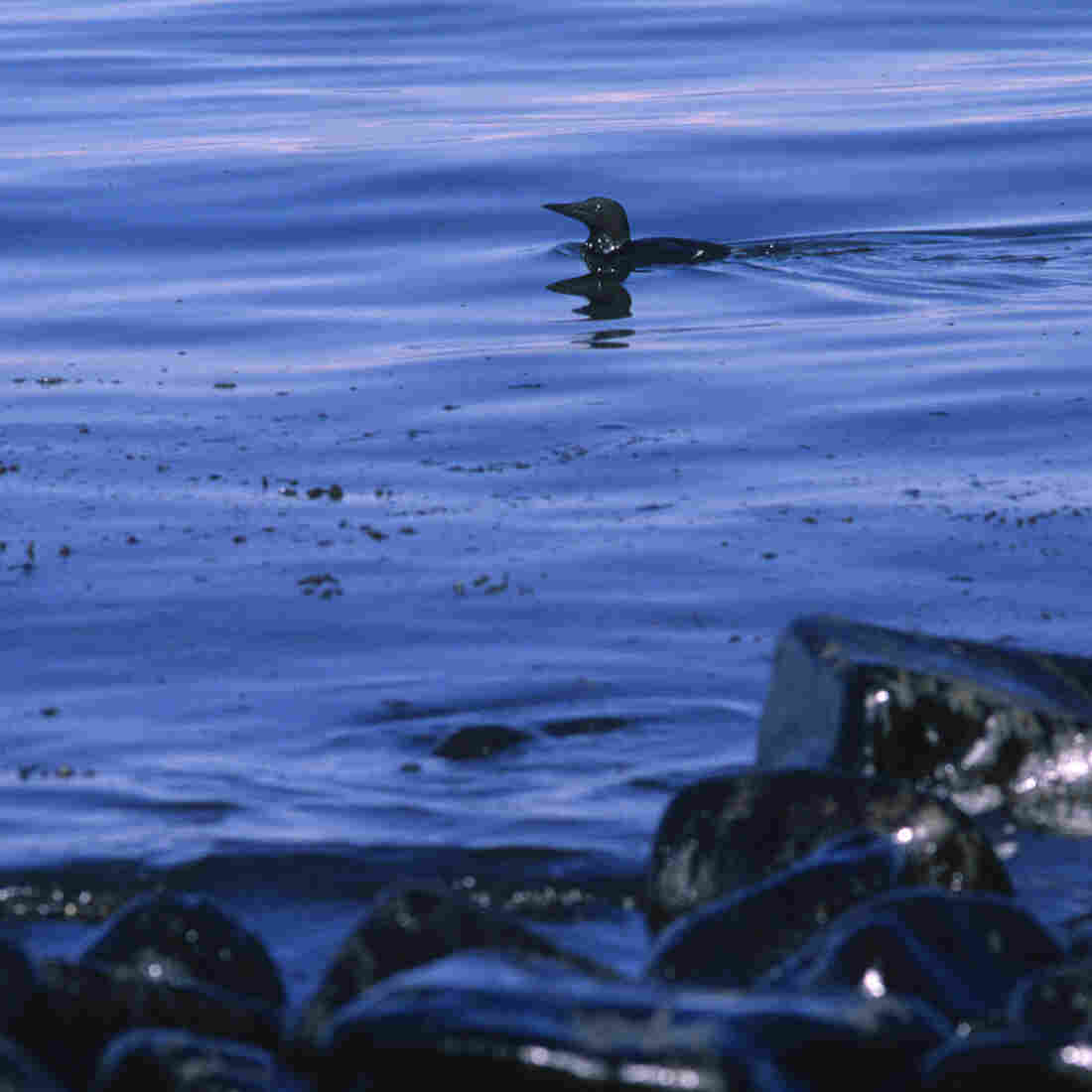 Why The Exxon Valdez Spill Was A Eureka Moment For Science