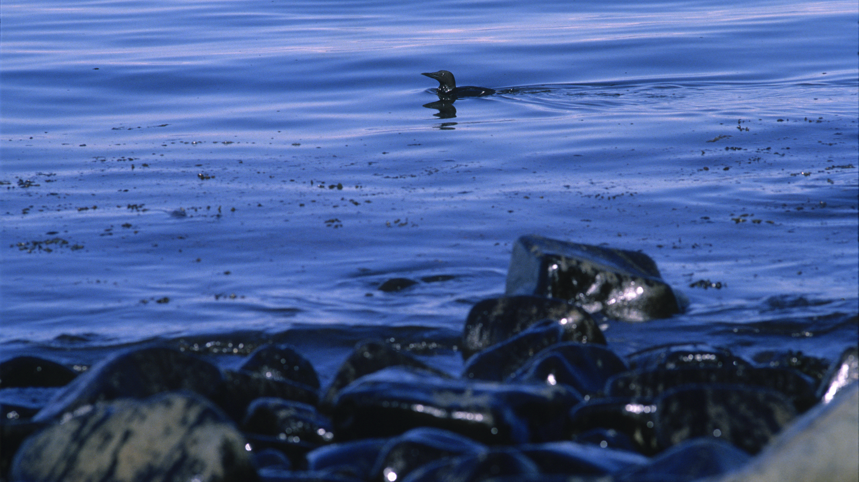 an analysis of the oil tanker exxon valdez and the oil spill in alaskan shoreline An exxon oil tanker, the exxon valdez the exxon valdez oil spill still taints the image of valdez downtown valdez is lively in a uniquely alaskan way.