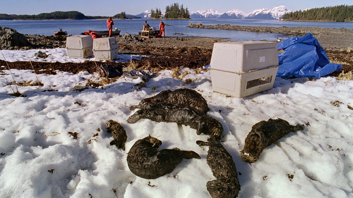 1989 exxon valdez oil spill notes Ap was there: exxon valdez runs aground in 1989 by the associated press, associated press – 24 march 2014 12:06-04:00 editor's note.