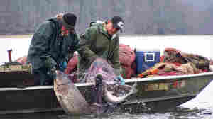 Carp(e) Diem: Kentucky Sends Invasive Fish To China