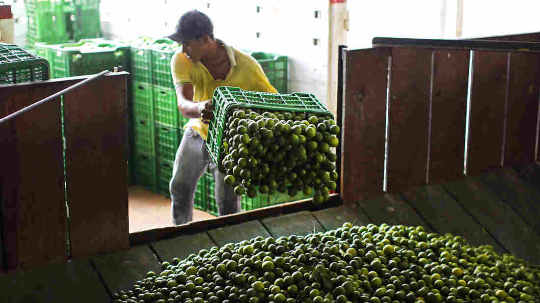 A worker unloads a truck full of Mexican limes at a citrus packing plant in La Ruana, in the state of Michoacan, Mexico.
