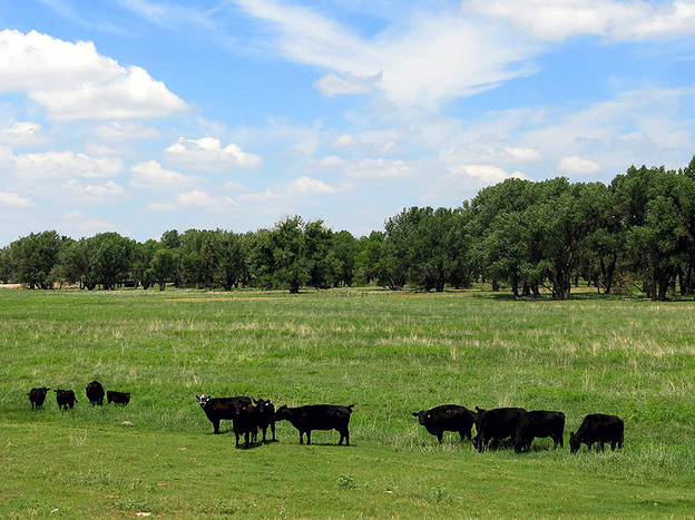Fox Ranch, outside Yuma County, Colo., is a 14,000-acre nature preserve and working cattle ranch owned by The Nature Conservancy. The ranch is an experiment in planned grazing, which aims to improve soil health and help ranchers' bottom lines.