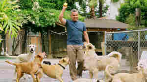 Cesar Millan's Long Walk To Becoming The 'Dog Whisperer'