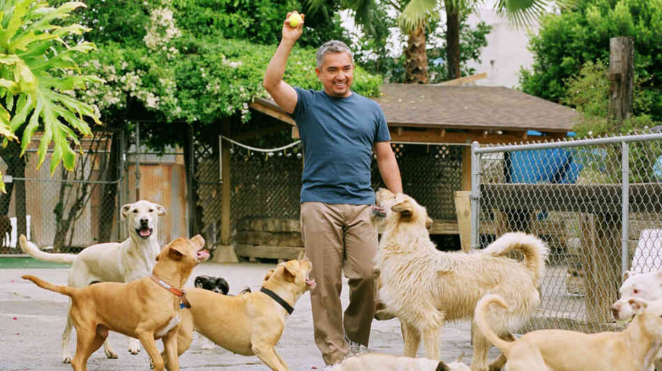 Cesar Millan's television show Dog Whisperer on National Geographic debuted in 2004, but Millan previously spent years struggling to pursue a career as a dog trainer.