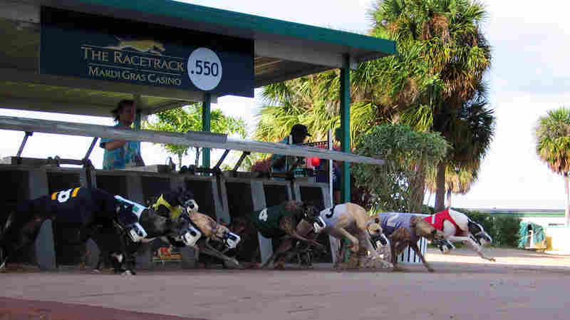 Greyhound Racing May Be Headed For The Finish Line