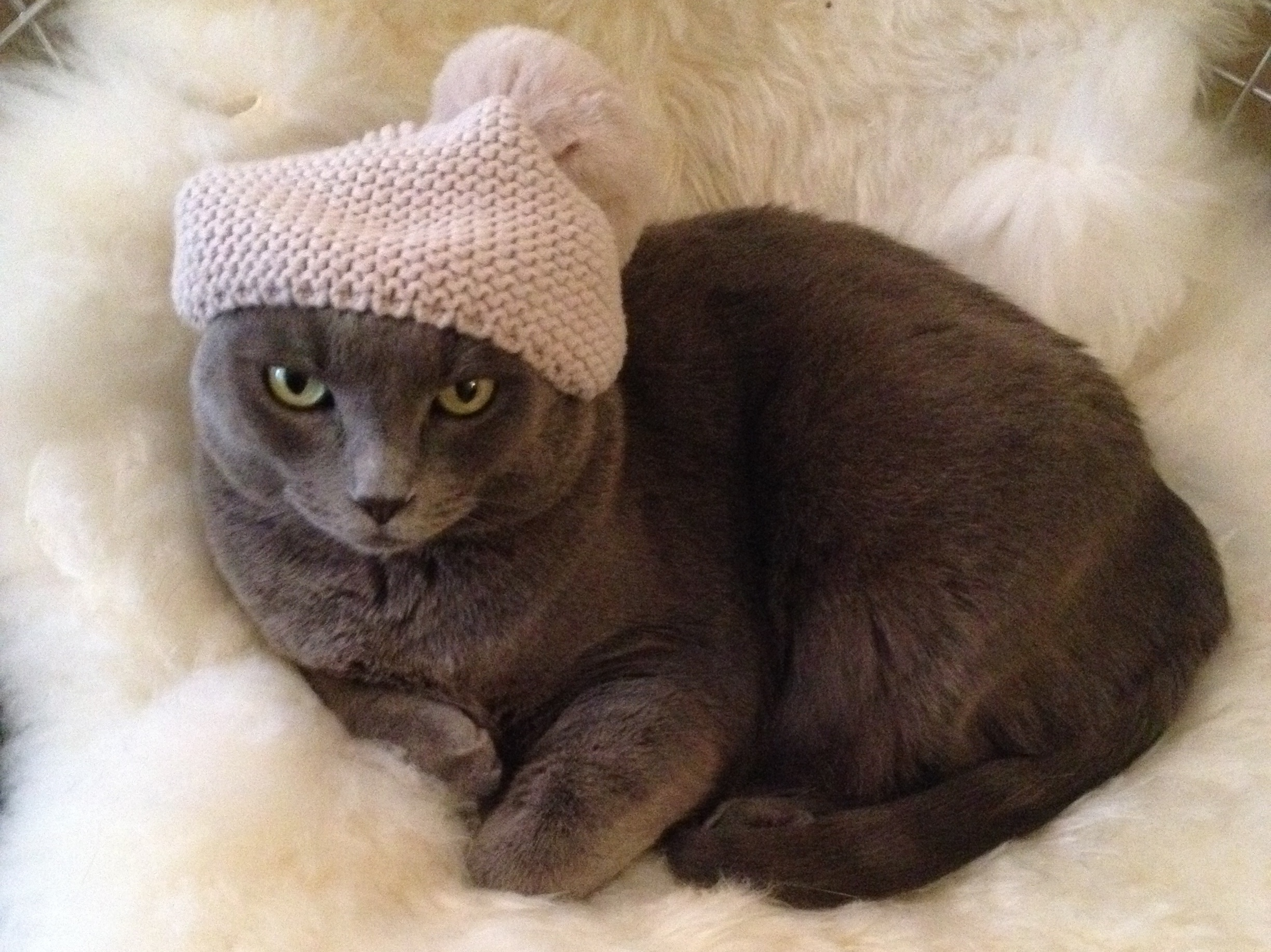 Bruiser's hat-wearing skills aren't in doubt -- but does he have what it takes to be a true Internet celebrity?