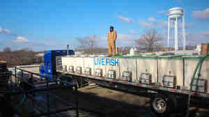 Live tilapia raised by Blue Ridge Aquaculture are loaded into a truck bound for New York.