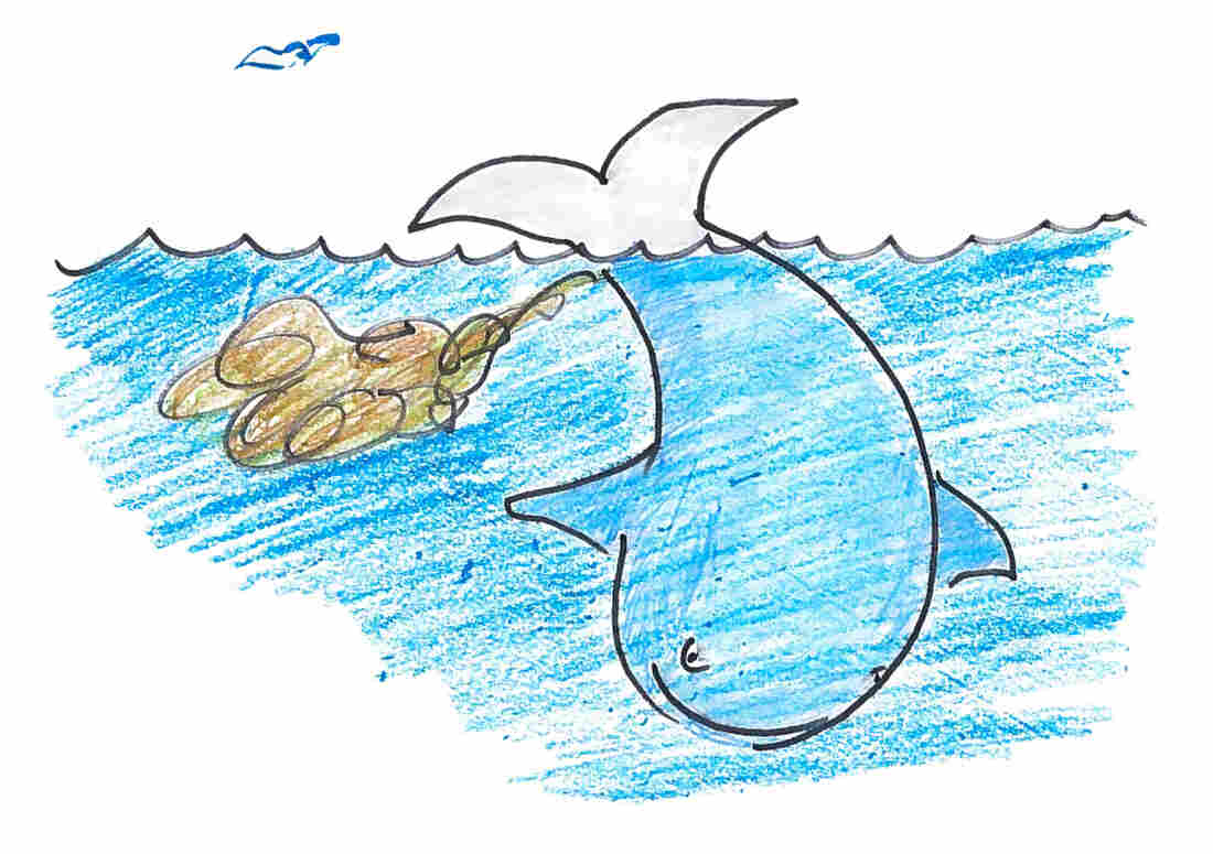 Pooping near the ocean surface can lead to a bigger dinner for whales.