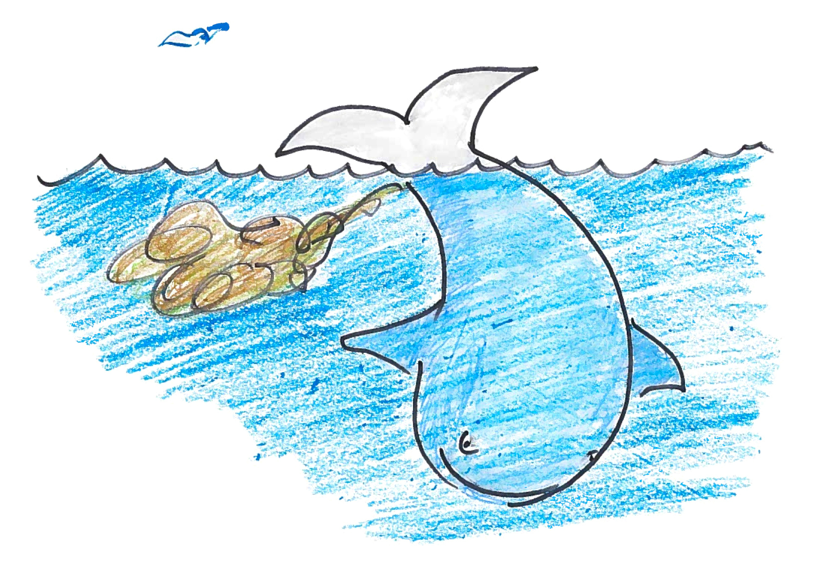 The Power Of Poop: A Whale Story