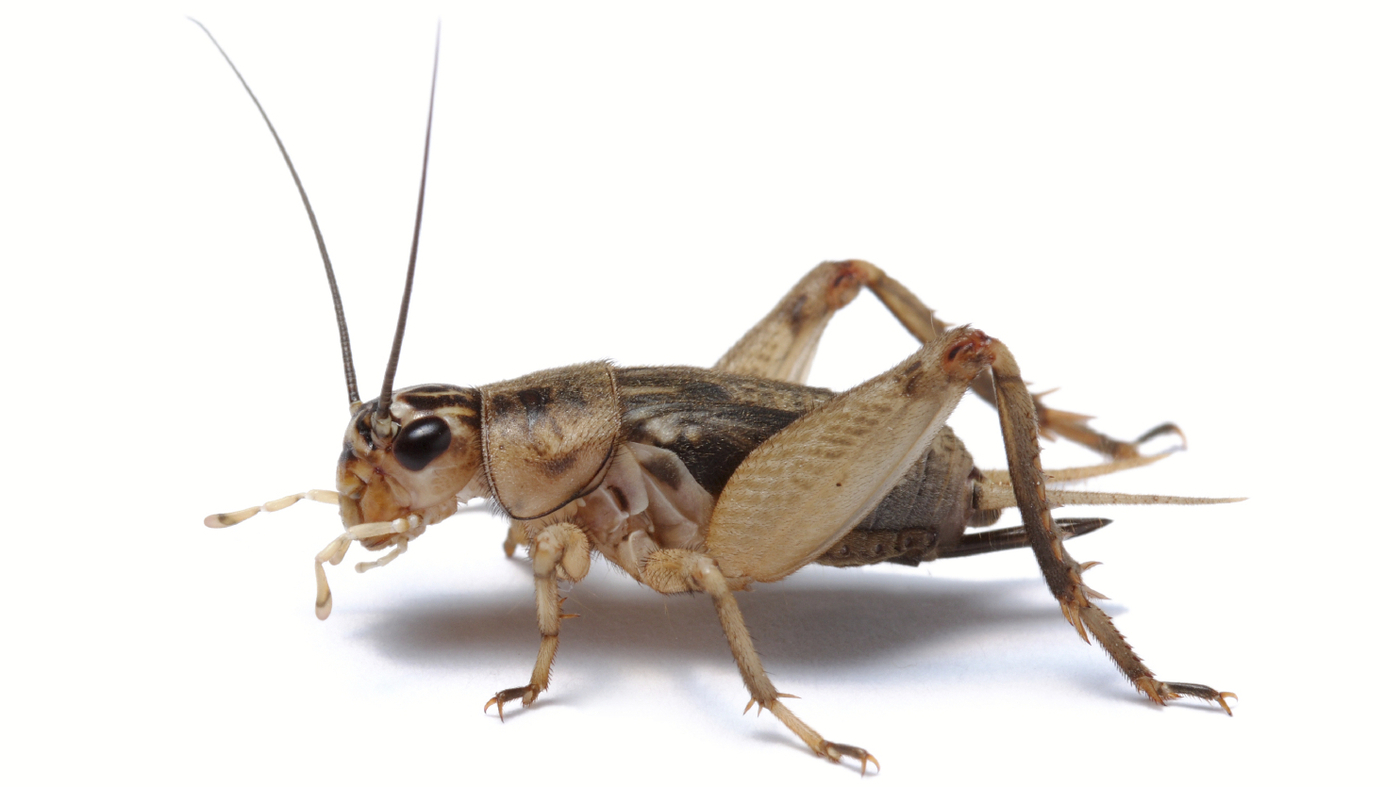 The Joys And Ethics Of Insect Eating : 13.7: Cosmos And ...