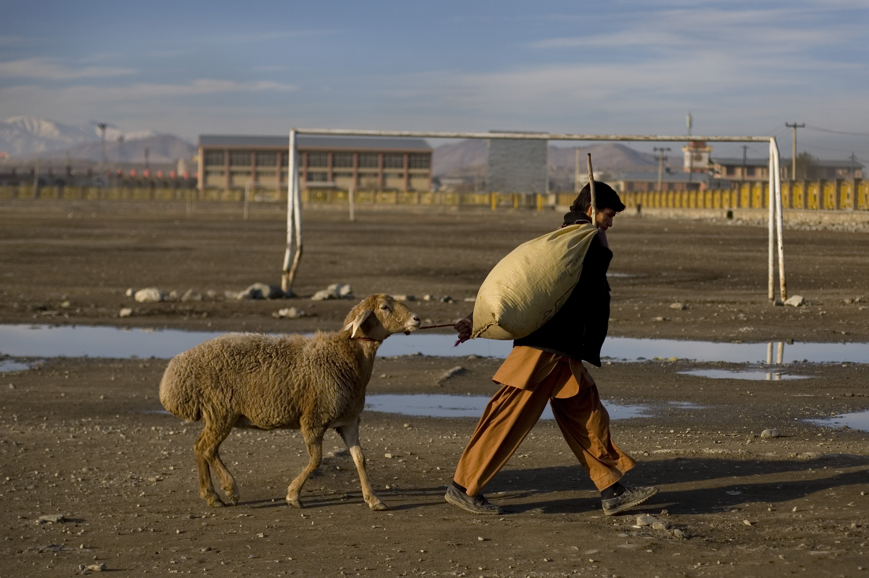 An Afghan man drags a sheep home after buying it at a market ahead of the Eid festival in 2009.
