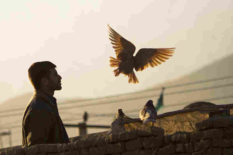 An Afghan man watches his pigeons after feeding them in Kabul in March 2012.