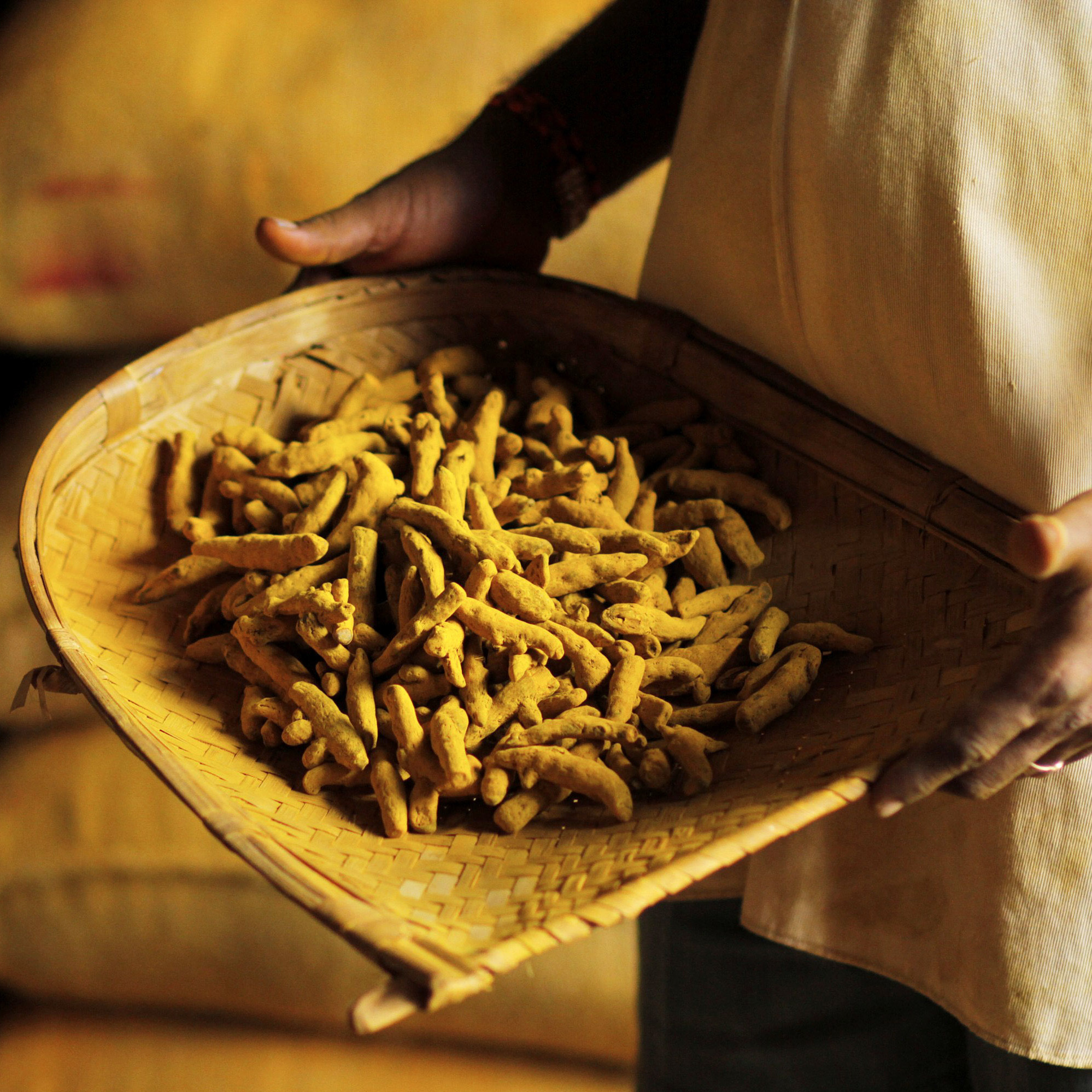 Ground turmeric comes from a golden-yellow root native to India.