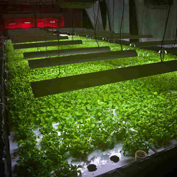 Food Scraps To Fuel Vertical Farming's Rise In Chicago