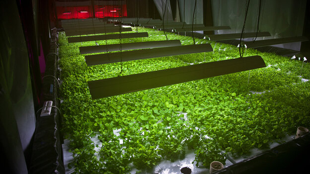 Arugula plant beds inside The Plant, a vertical farm operation in Chicago.