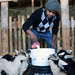 Got My Goat? Vermont Farms Put Fresh Meat On Refugee Tables