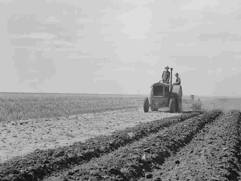 """Dust Bowl farmer drives a tractor with his son near Cland, N.M. (1938) Steinbeck writes: """"The tractors came over the roads and into the fields, great crawlers moving like insects, having the incredible strength of insects ... monsters raising the dust and sticking their snouts into it, straight down the country ... through fences, through dooryards, in and out of gullies in straight lines ..."""""""