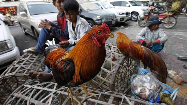 Street vendors sell chickens at a market in Phnom Penh, Cambodia, in early 2013. Last year Cambodia reported more cases of H5N1 bird flu than any other country.