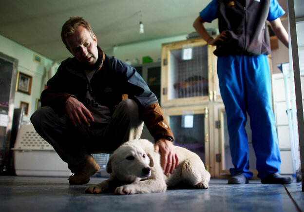 "Pen Farthing, founder of Nowzad Dogs in Kabul, pets a dog named Barfi (""Snowy""), who was rescued from an Afghan army base. After rescuing a number of dogs during his tour, Farthing came back to Afghanistan to establish a shelter and clinic that's been able to transport about 700"