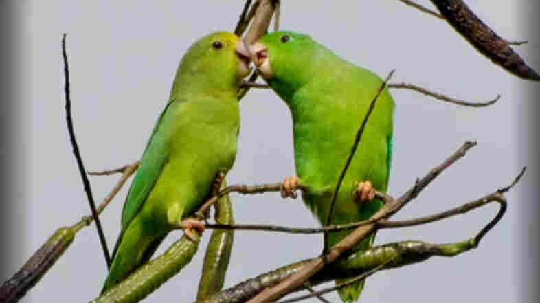 Can It Be? Parrots Name Their Children, And Those Names Stick For Life