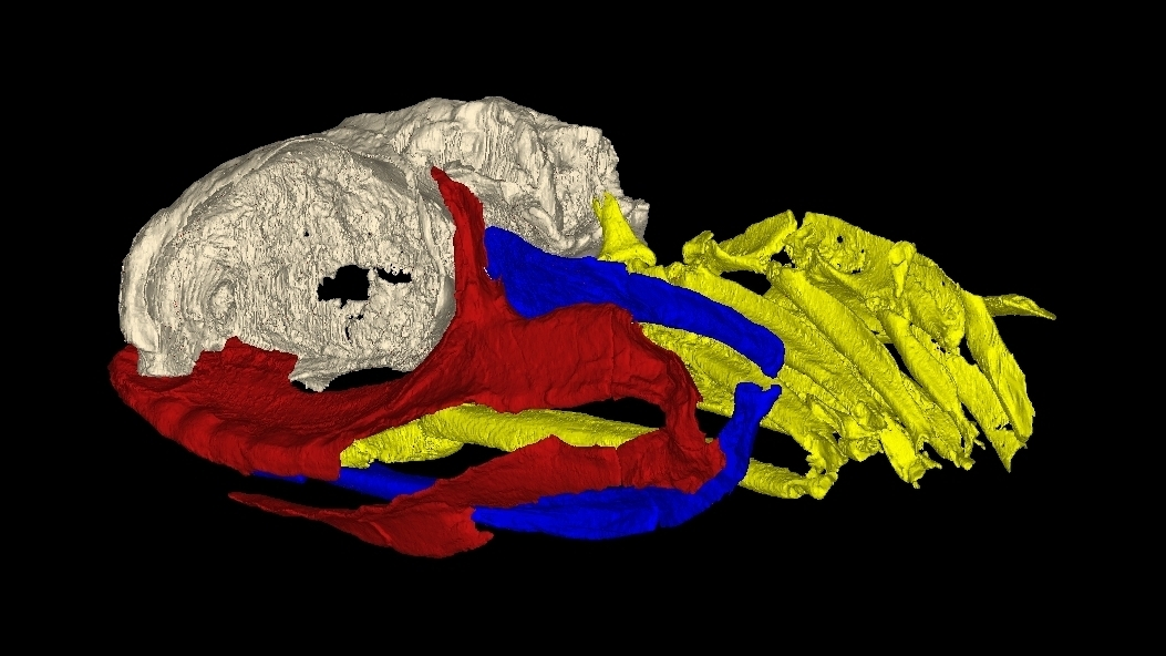New Fossil Takes A Bite Out Of Theory That Sharks Barely Evolved