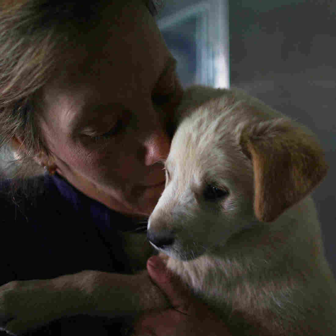 Louise Hastie, the shelter manager of Nowzad Dogs in Kabul, holds a stray puppy named Aki. Afghanistan has a large population of street cats and dogs. While there are no government programs to control the animals, foreigners have taken in some.