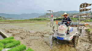 Xiang Zhengming plants rice seedlings in a field in southeast China's Fujian Province earlier this month. A newly released report says nearly 20 percent of the country's farmland is contaminated.