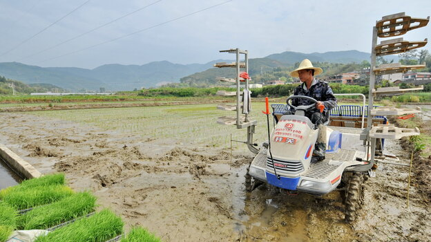 China's toxic farmland
