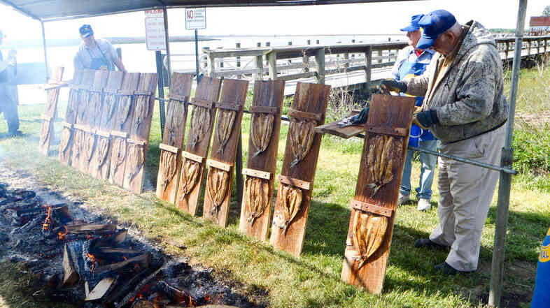 Shad plankers prepare the fish for the annual Shad Planking event in Vienna, Va., in 2011.