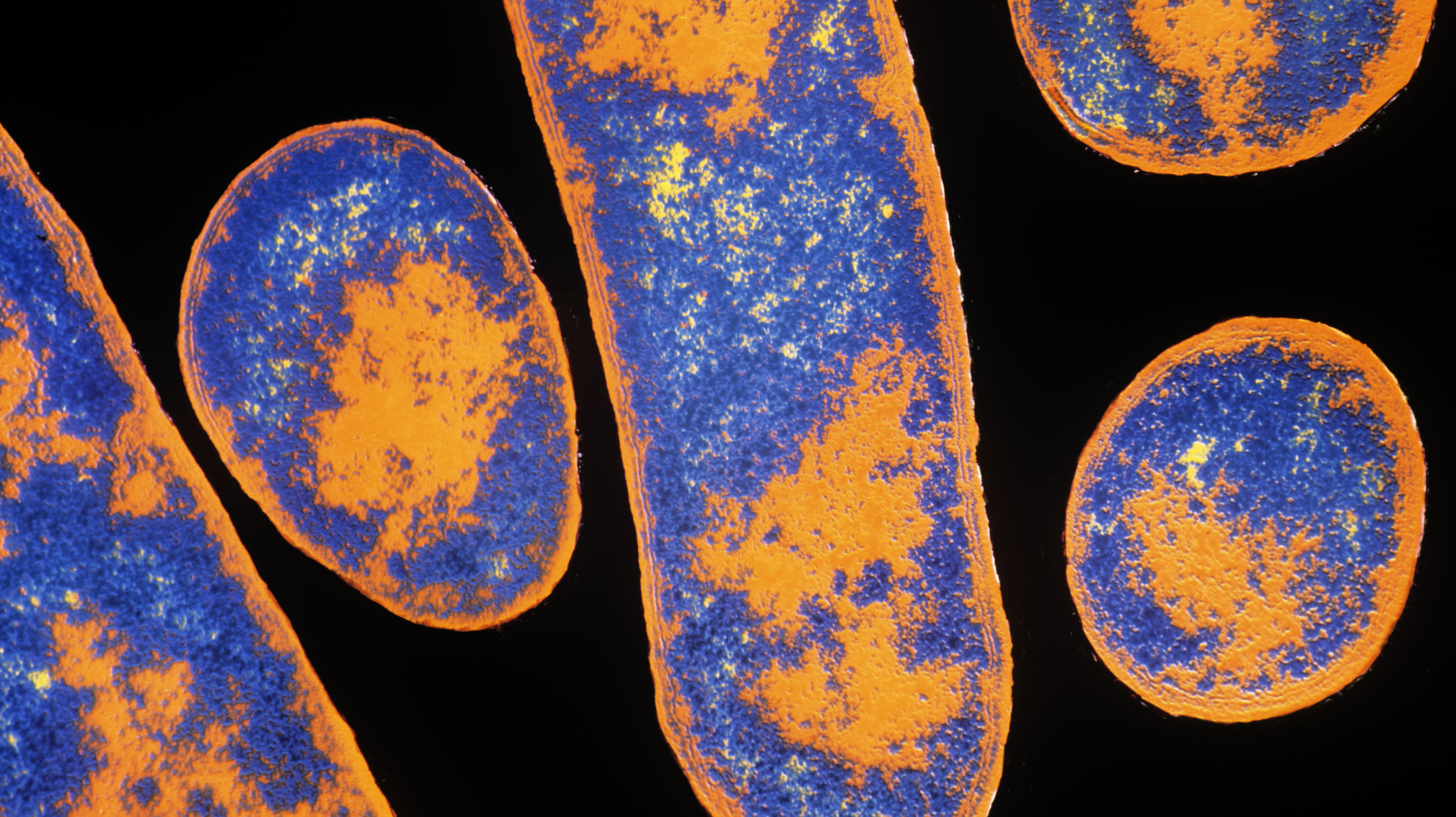 research on and usage of the botulinum bacteria