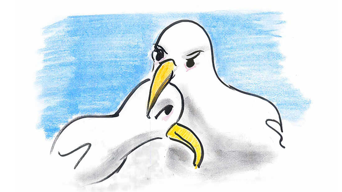It can 15 years to decide on a partner, but having decided, albatrosses don't switch.