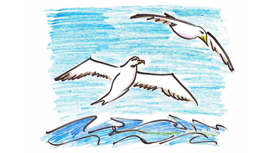 Albatrosses turn out to be among the animal kingdom's most successful couplers.