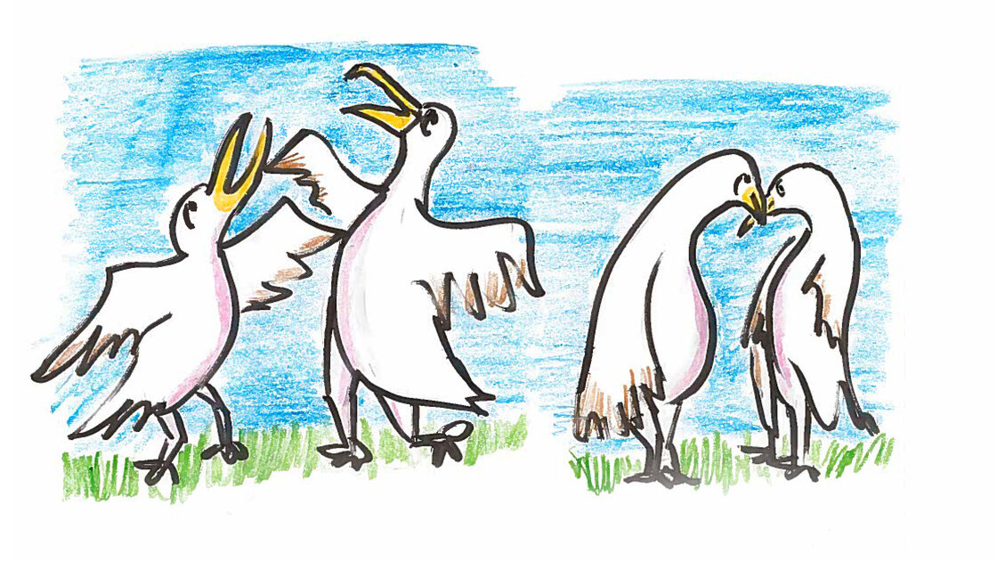 They dance to test each other's reflexes, while pointing their beaks at the sky.