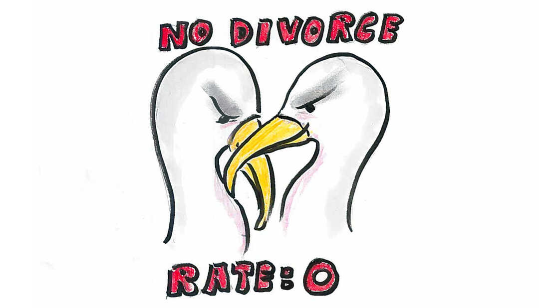 Albatrosses have the lowest divorce rates.