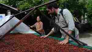 Slowly And Sweetly, Vietnam's Chocolate Industry Grows