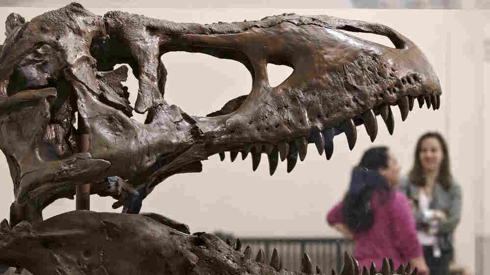 Fossil Fans Get Their Dino-Fix Before Smithsonian Renovates