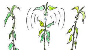 5. A bean plant screaming.