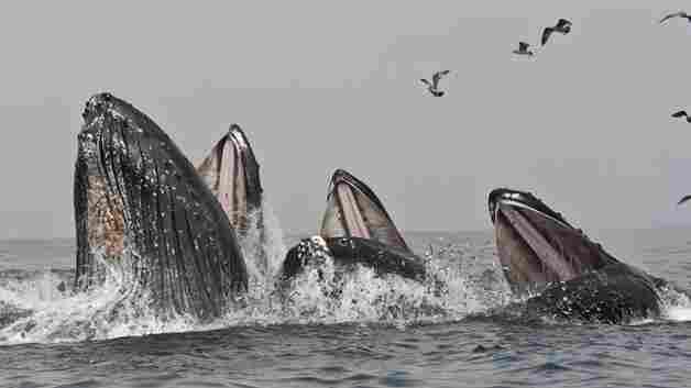 Monterey Bay An 'Ocean Buffet Open For Business' This Spring