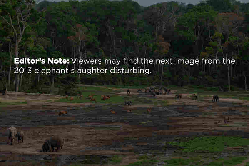 Editor's Note: Viewers may find the next image from the 2013 elephant slaughter disturbing.