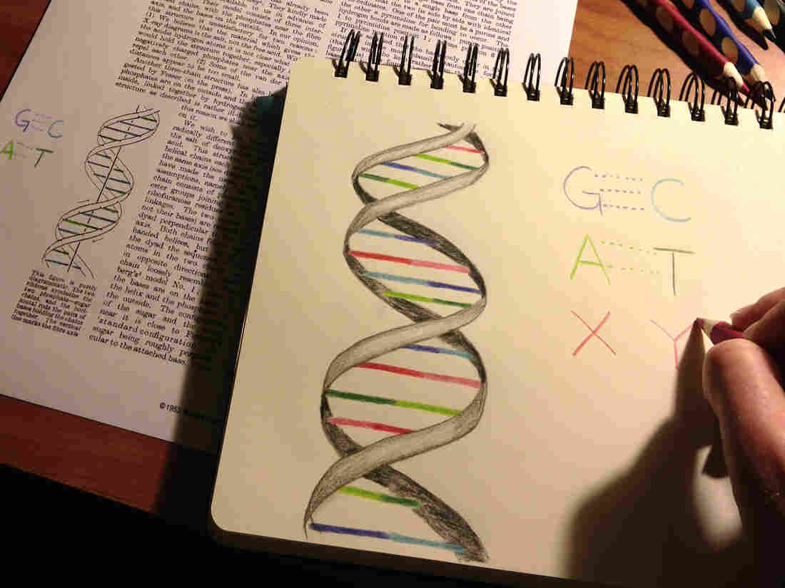 Being able to insert the two man-made letters into DNA, alongside the usual four-letter alphabet, could teach old cells new tricks and lead to better drugs, researchers say.