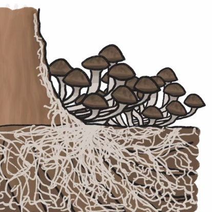 A fungus that stretches (underground) across more than a couple thousand acres of an Oregon national forest  is a contender for largest organism.