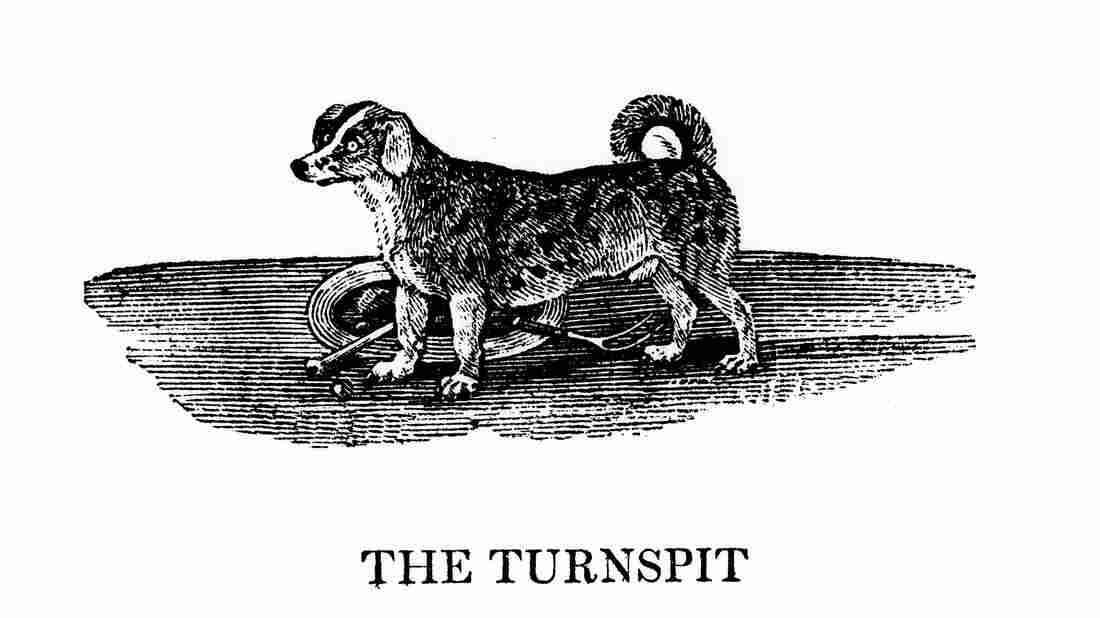 In 1750 there were turnspits everywhere. By 1850 they had become scarce, and by 1900 they had disappeared.