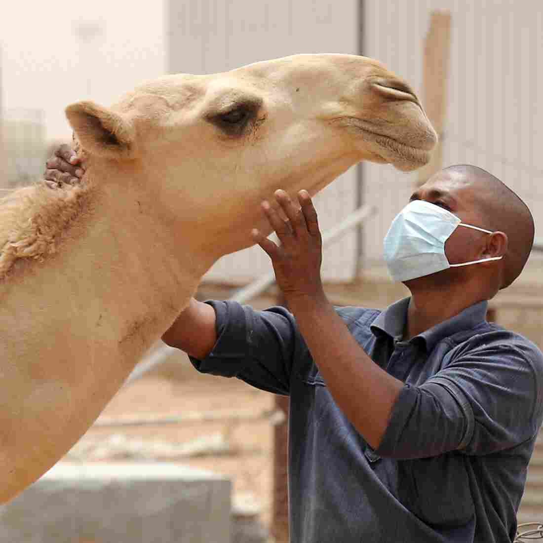 Deadly MERS Virus Detected In Florida