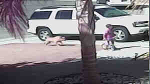 An image taken from a video posted by Roger Triantafilo shows a dog closing in on his son Jeremy earlier this week. The family's cat fought off the dog after it bit the 4-year-old boy.