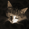 Cat promo image